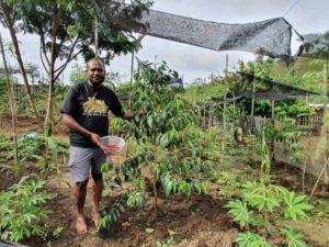 coffee papua